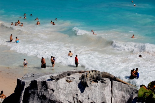 SOAKING UP THE SUN: Beachgoers in Tulum, Mexico are not the only ones enjoying the rays.
